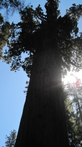 General Sherman, the world's biggest tree. Photo by author.