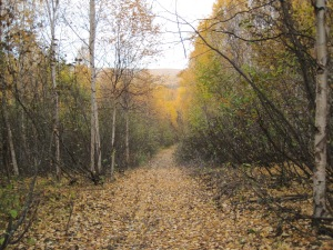 Photo by Author, Fairbanks in autumn